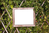 Blank wooden board on the bamboo fence with green vine — Stock Photo