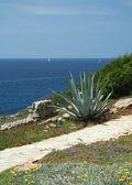 Mediterranean2 — Stock Photo