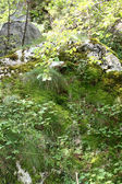 Çimenli dik yamaç — Stok fotoğraf