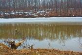 Paysage de lac — Photo