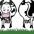 Cow front and back — Stock Vector