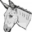 Stock Vector: Sketch donkey head