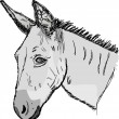 Sketch donkey head — Stock Vector