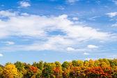 Fall Tree Line and Sky — Stock Photo