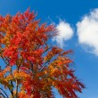 Giant Fall Tree and Clouds — Stock Photo #7980354