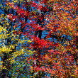 Yellow, Red, and Orange Fall Leaves — Foto de Stock