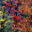 Stock Photo: Yellow, Red, and Orange Fall Leaves