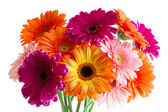 The bouquet of bright gerbera — Stock Photo