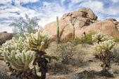 Beautiful desert landscape with Saguaro cacti — Stock Photo