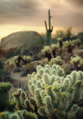 Beautiful desert landscape with Saguaro cacti and rock buttes — Stock Photo