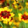 Summer flowers - Stockfoto