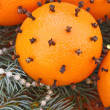 Oranges with cloves — Stock Photo