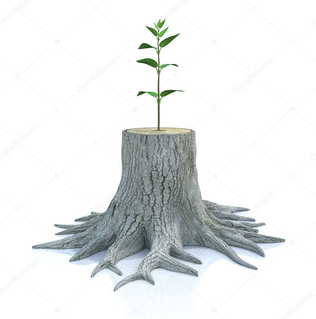 Semis d 39 arbres jeunes poussent de vieille souche photographie mipan 7987177 - Produit destructeur de souche d arbre ...
