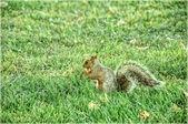 écureuil — Photo