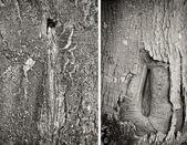 Cracks in the bark of a tree — 图库照片