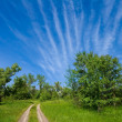 Stock Photo: Summer rural landscape