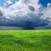 Green field by a shower — Stock Photo