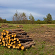 Heap of trunks on forest glade — Stock Photo #10316538