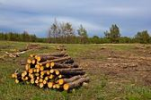 Heap of trunks on a forest glade — Stock Photo
