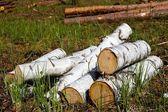 Heap of birch logs in a grass — Stock Photo