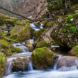 Small brook in a canyon — Stock Photo