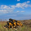 Heap of trunks on a forest glade — ストック写真