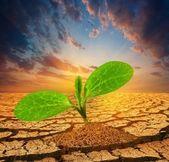 小さな植物の乾燥した地球を介してプッシュ — ストック写真