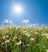 Summer field — 图库照片