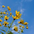 Yellow flowers on blue sky background — Stock Photo #7983067