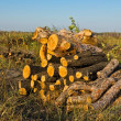 Pile firewood in forest glade — Stock Photo #7983295