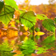 Autumn birch branch reflected in a water — Stock Photo #7984204