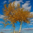 Beautiful autumn birch on a blue sky background — Stock Photo