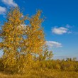 Stock Photo: Alone birch tree in prairie