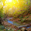 Autumn canyon by a sunny day — Stock Photo
