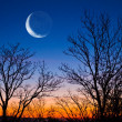 Stock Photo: Half moon on evening sky