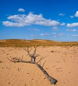 Dry branch in a desert — Stock Photo