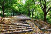 Stairwayin park — Zdjęcie stockowe