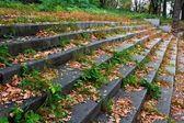Scalinata di pietra in un autunno asciutto lascia — Foto Stock