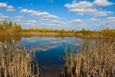Quiet autumn lake — Stock Photo