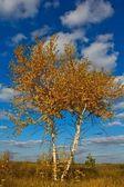 Beautiful autumn birch on a blue sky background — Stock Photo