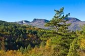 Mountain forest landscape — Stock Photo