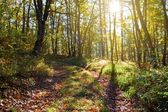 Autumn forest in a rays of sun — Stock Photo