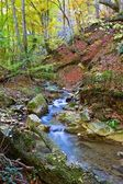 Small brook in a autumn canyon — Stock Photo