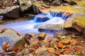 Autumn leaves and rushing water — ストック写真