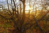 Evening autumn forest — Stock Photo