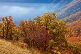 Morning in a mountain valley — Stockfoto