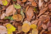 Closeup autumn leaves as a background — Stock Photo