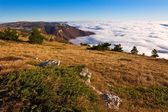 Mountain plateau above a dense clouds — Stock Photo
