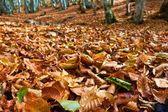 Foglie d'autunno asciutto closeup — Foto Stock