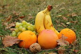 Fruits in a grass — Stock Photo